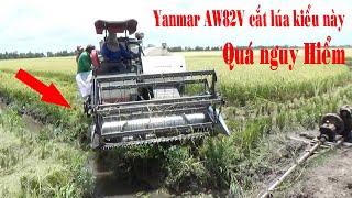 Máy cắt YANMAR AW82V cắt lúa kiểu này quá nguy hiểm