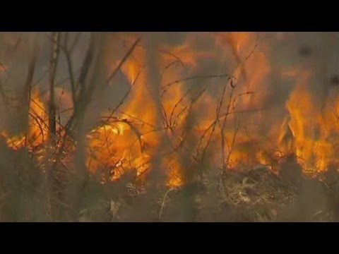 Australian heat wave sparks bush fires as temperatures reach 39C