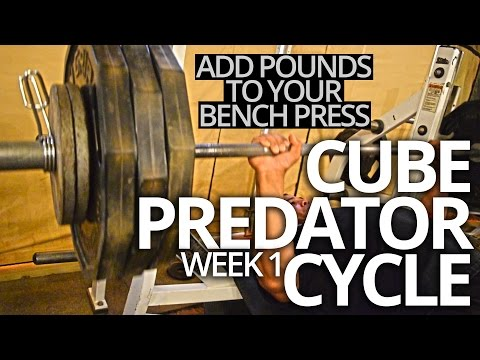 add-pounds-to-your-bench-press-//-cube-predator-cycle-|-week-1