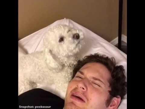 WHENEVER I'M SAD, MY DOG IS SAD