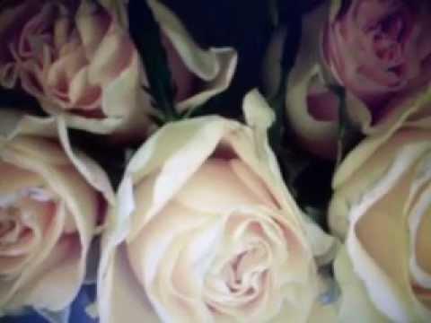 a-propos-des-roses