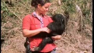 Chimps of Gambia Part I