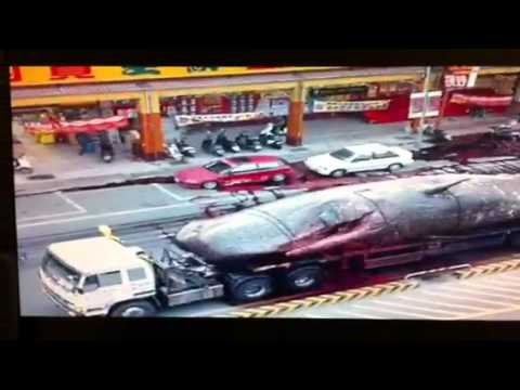 Japanease Whale Falls off truck.