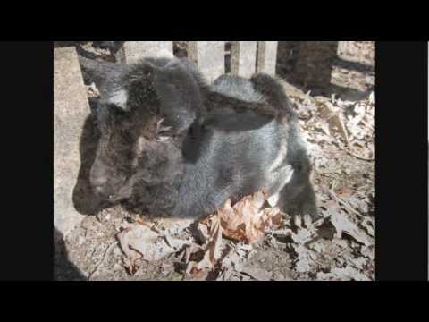 What Type Of Dairy Goat Should Get Finding The Right One For You