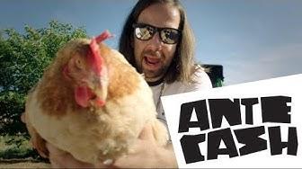 ANTE CASH - ANTE (OFFICIAL VIDEO 2017)