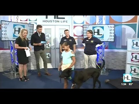 Meadowlake Pet Resort & Training Center on KPRC Houston Life