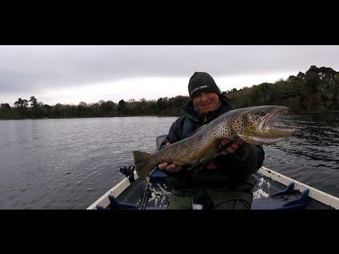 Big  Ferox trout from Lough Corrib , Releasing