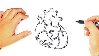 How to draw a Human Heart Step by Step