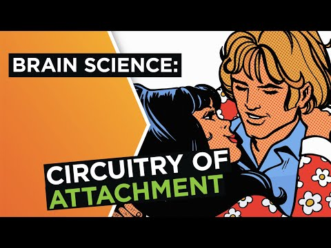 Brain In Love: The Science Of Attachment In Relationships | Helen Fisher | Big Think