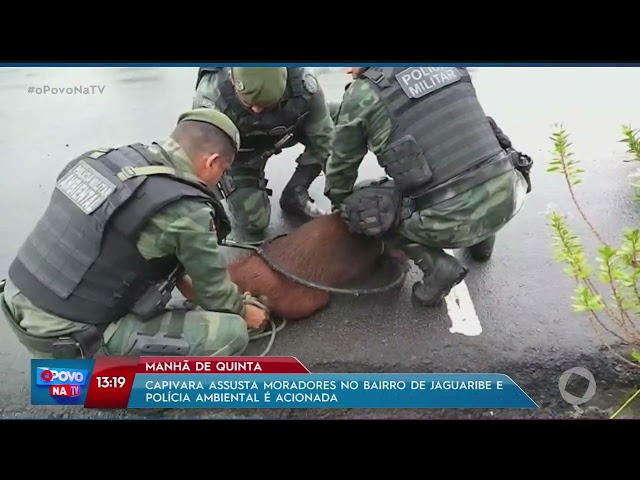 Capivara assusta moradores no bairro de Jaguaribe e Polícia Ambiental é acionada- O Povo na TV
