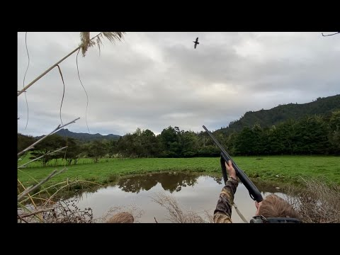 DUCK HUNTING ON SMALL WATER-a successful hunt!