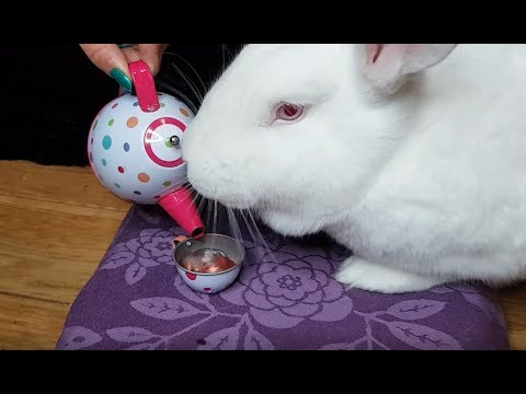 Bunny drinking tea and eating his meal from his children's tea set
