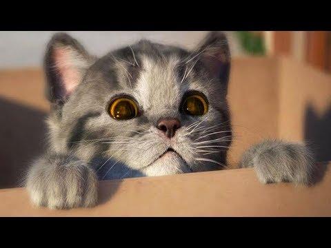 Lindo Gatito Solo en Casa - Cute Kitten Need a Home | Dibujos Animados Infantiles Juegos