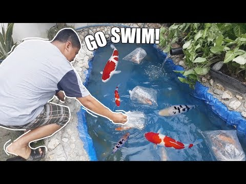 LOADING KOI FISH & DESIGNING FILTER BOX!