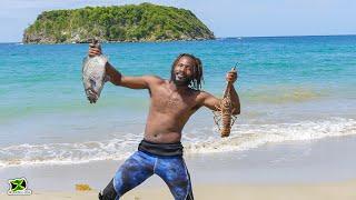 Spearfishing Around Cabarita Island, In Port Maria For Sunday Dinner | Big Chub & Big Lobster