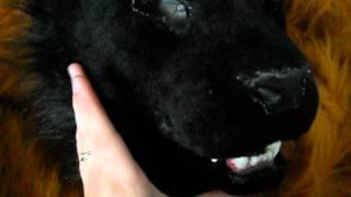 Black feline fo sale