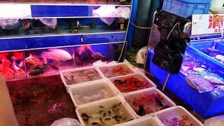 Unbelievable Aquarium Fish Market [Tour]