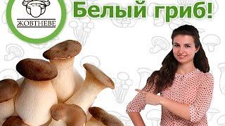 Выращивание. Белый степной гриб или королевская вешенка.