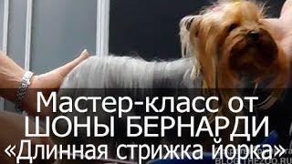 стрижка собак видео уроки