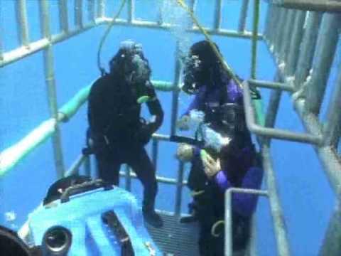 Weißer Hai Käfig