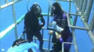 SchoenerTauchen: Weißer Hai Tauchen mit der Nautilus Explorer