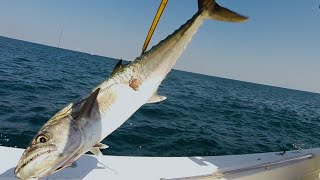 The Technique to Catching Kingfish with Live Bait