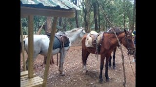Horse farming in Kenya – part 1