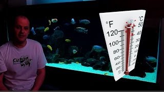 African Cichlids - How Water Temperature Affects Their Behaviour