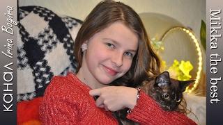 Бурманская кошка Микка самый лучший и веселый  друг ♡ Burmese cat for kids ♡ funny cats