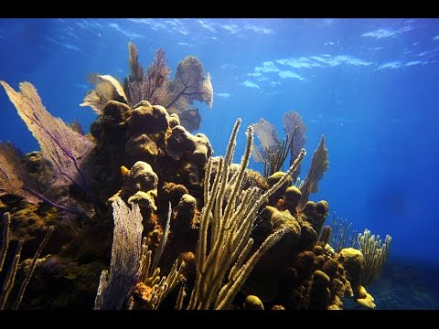 Snorkeling & Diving Roatan : Dolphins, Eagle Rays, Seahorses, and much more !