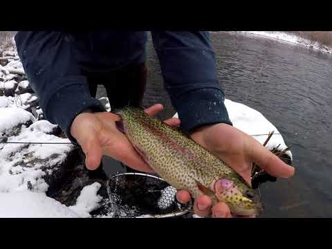 CT Early Winter Salmon Montage