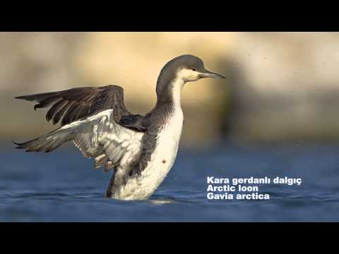 Türkiye'nin Kuşları / Birds Of Turkey