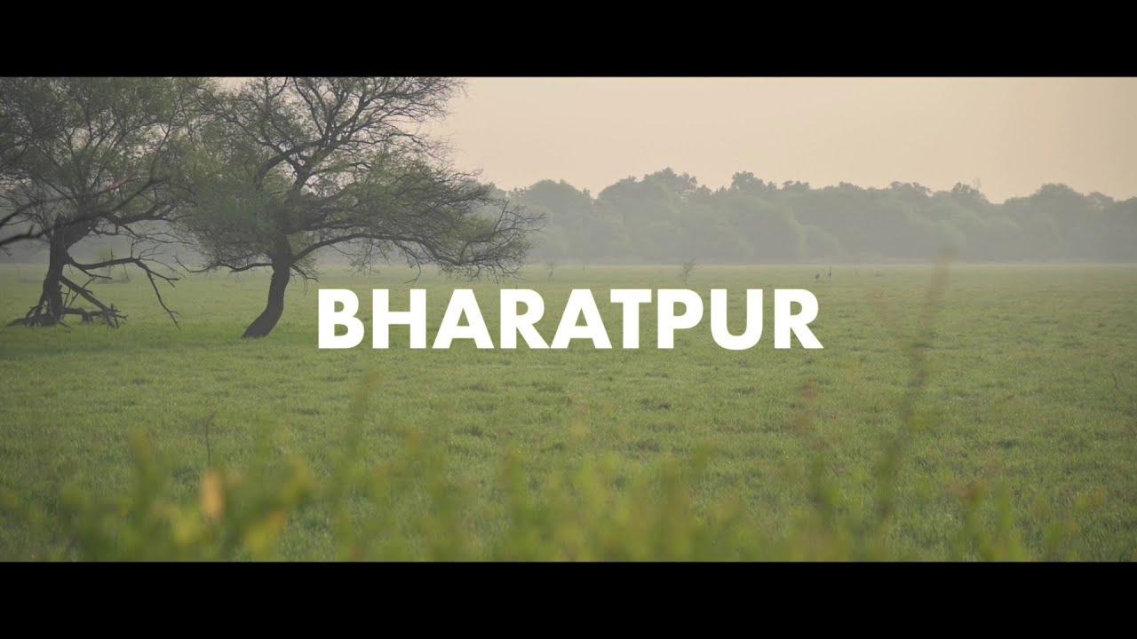 Glimpse of Bharatpur Bird Sanctuary - Shot on Z 6