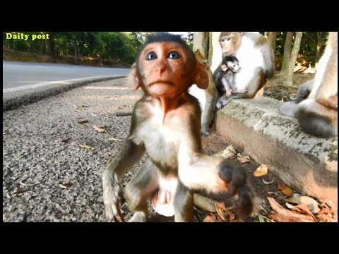 Cute And Funny Baby Monkey - Adorable Baby Monkey Loves Cameraman, Daily Post, Angkor Park