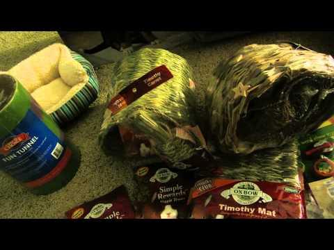 Black Friday Petsmart Guinea Pig Haul
