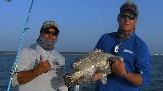 Tripletail fishing off of Cape Canaveral