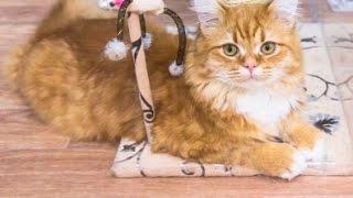 Работа мечты  в Выборгский замок ищут пресс секретаря для кота