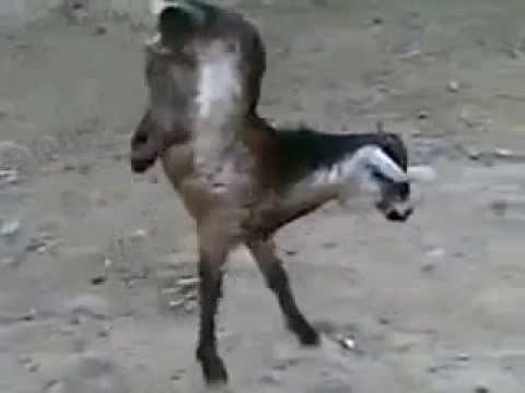 حركات حيوانات anemals
