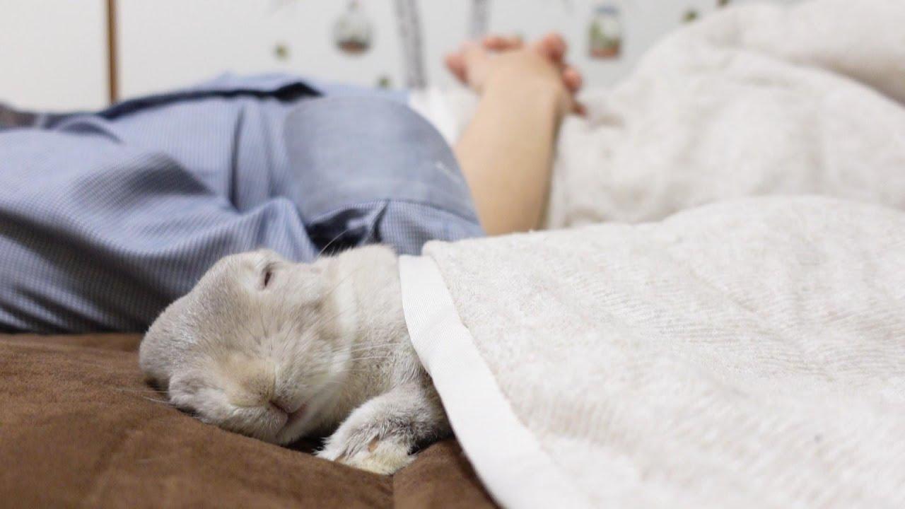 うさぎと飼い主がいっしょに眠りに落ちていく瞬間をカメラが捉えていました