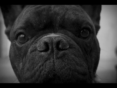 Doku Hunde