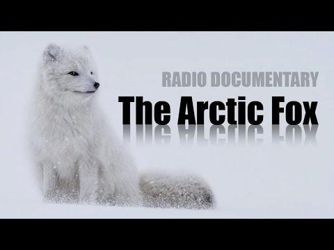 The Arctic Fox - RTE Radio 1 Documentary