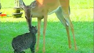 Song A Day #206: The Deer and The Cat