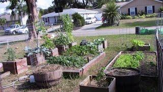 Zone 9 December Garden Update