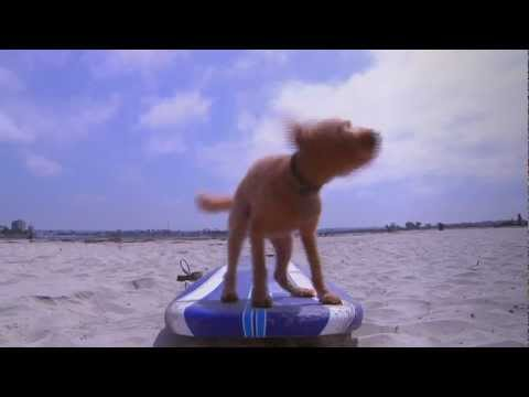 DOG ON SURF BOARD [DogTV]