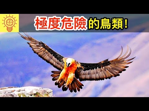 10個世界上【最致命的鳥類】!需立即逃命!