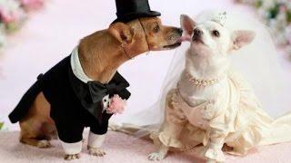 Как сыграть свадьбу в Лас-Вегасе. Хитрости, тонкости, нюансы