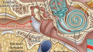 What Is a Middle Ear Infection? | Ear Problems