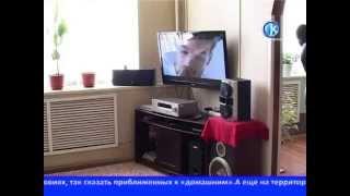 24 02 2014 Условия в ИК№5