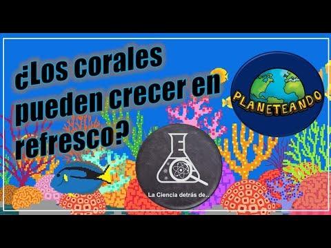 COLABORACIÓN (Con Planeteando)   ¿Los corales pueden crecer en refresco?