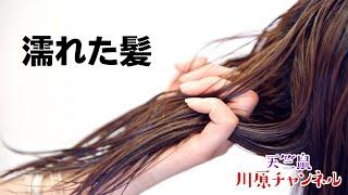 天竺鼠・川原チャンネル 「濡れた髪」